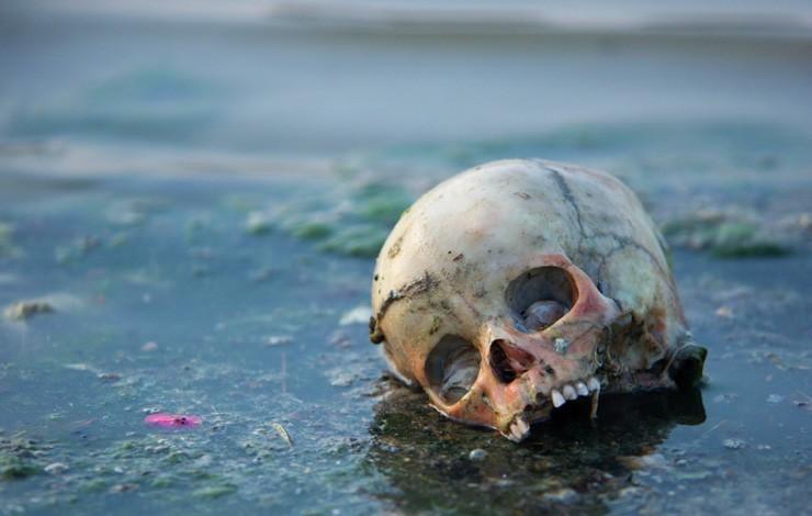 череп на берегу Ганга