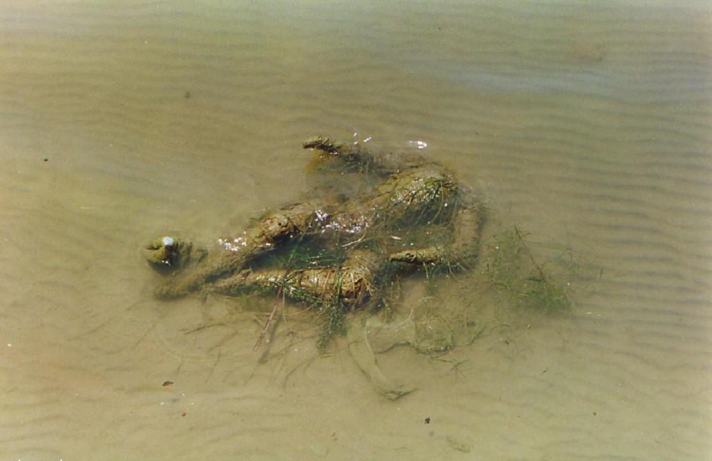 утонувшие тела Варанаси