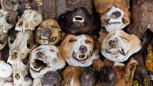 головы животных на рынке акодессева