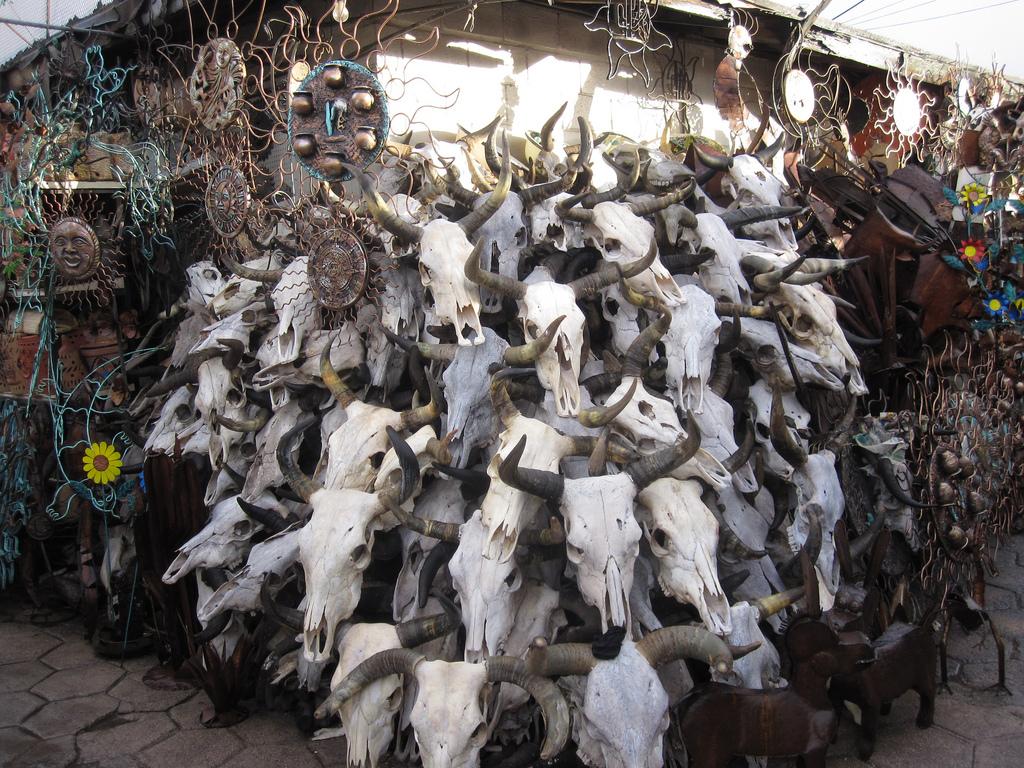 скелеты зверей на рынке