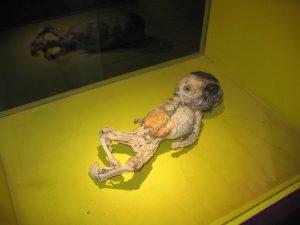 маленькая мумия