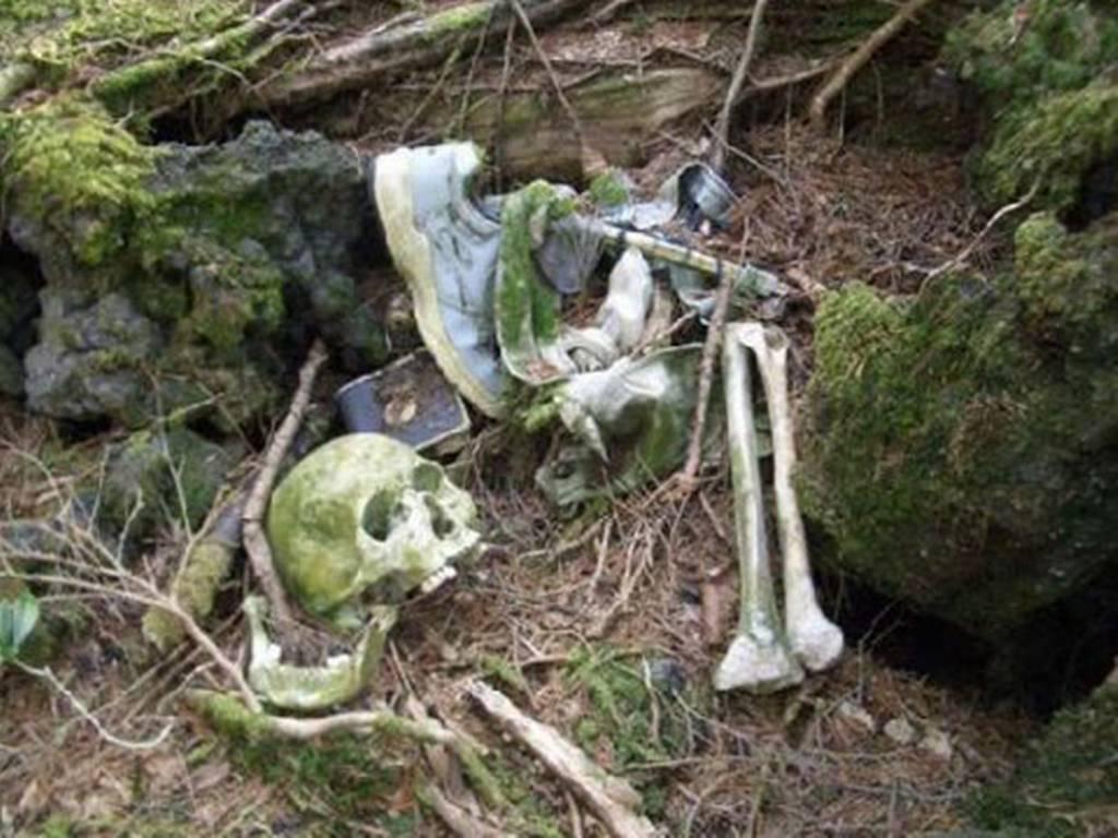 скелеты аокигахара