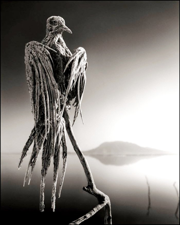 мумия дятла