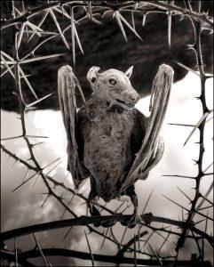 мумия летучей лисицы