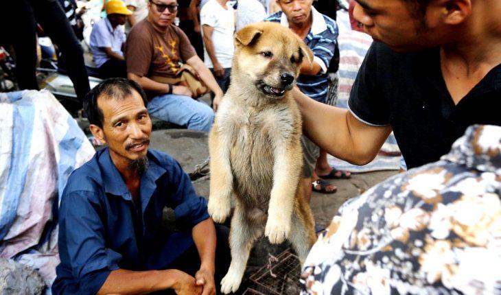 щенок на фестивале собак