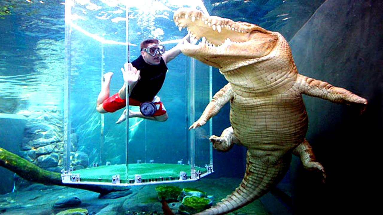 в компании крокодила