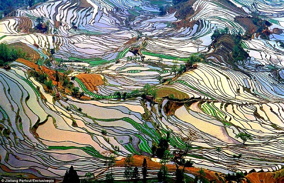 красивые рисовые поля