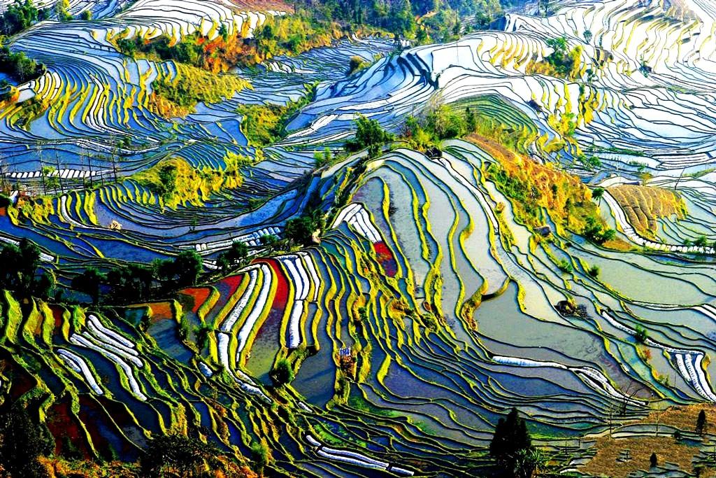 необычные рисовые террасы