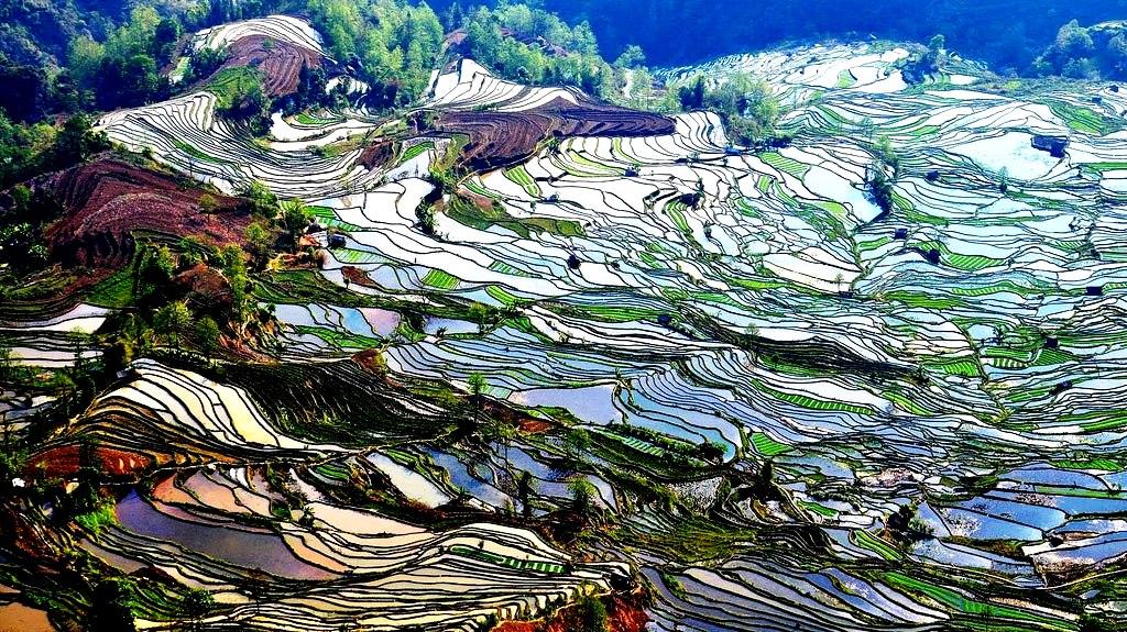 игра красок на рисовых террасах