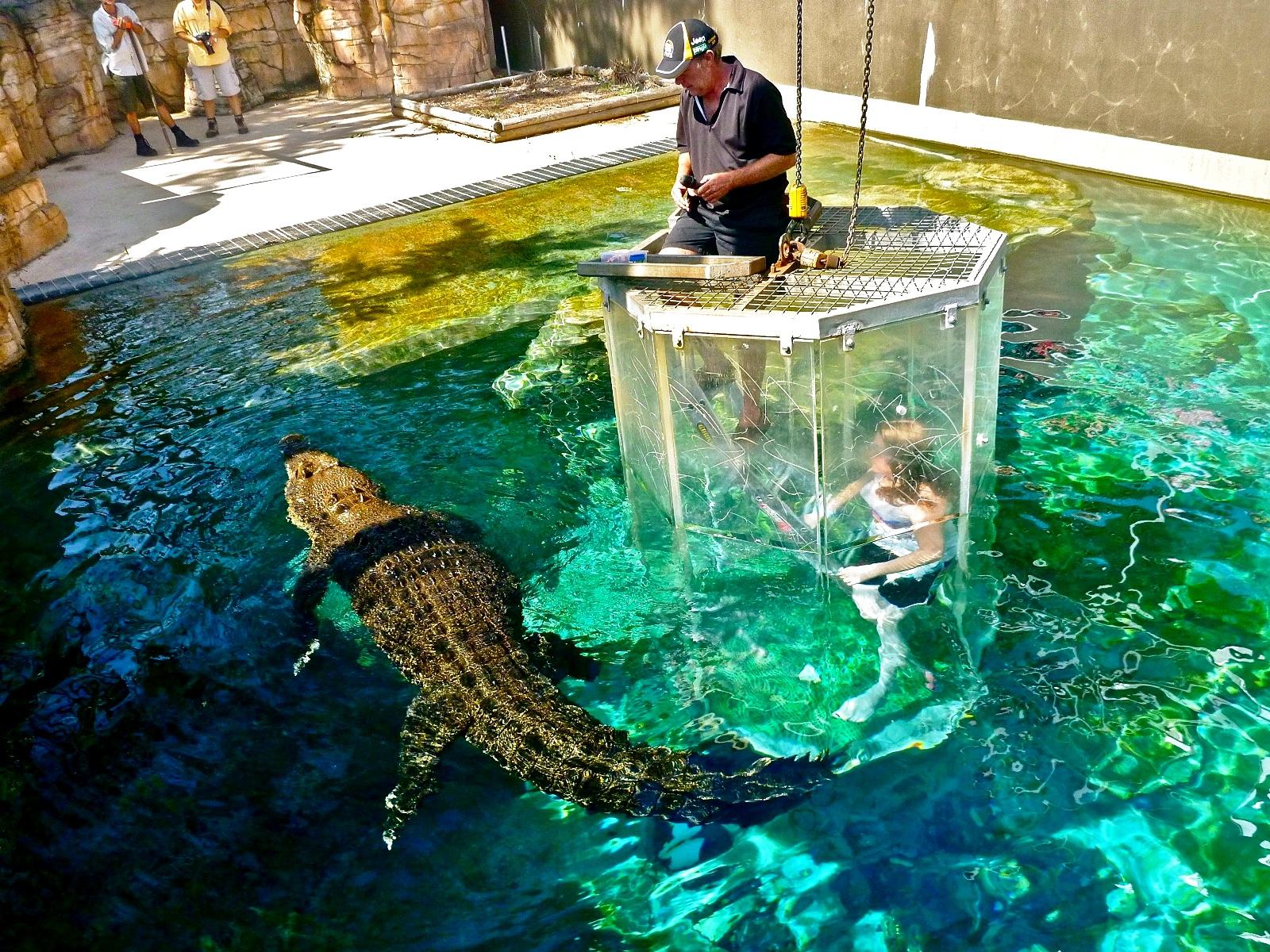погружение с крокодилом