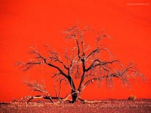дерево в долине дидвлей