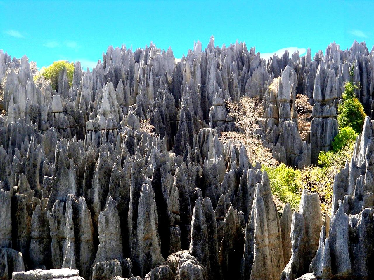 иглы каменного леса