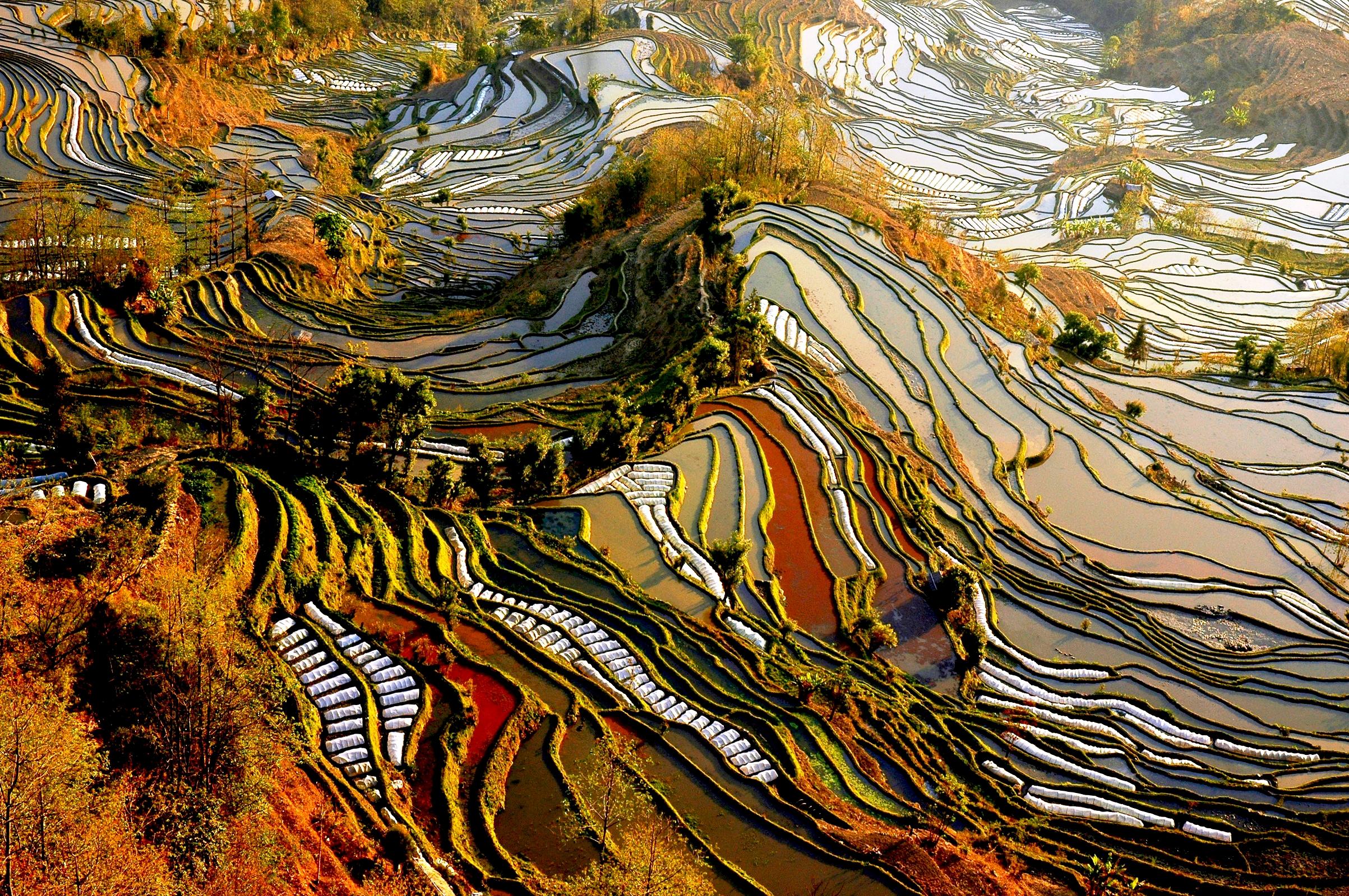 удивительные рисовые террасы