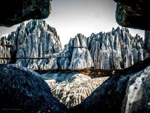тайны Каменного леса
