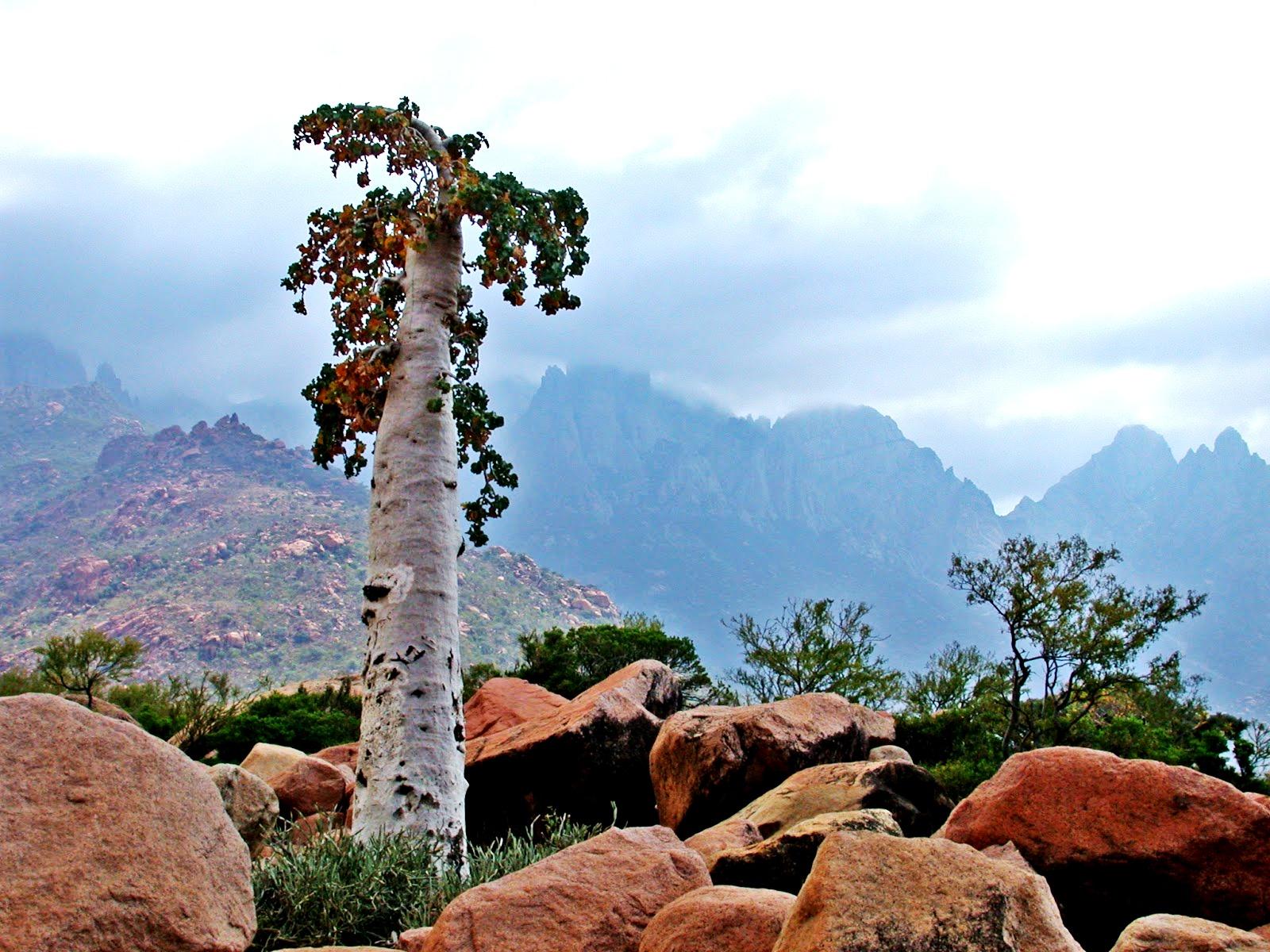 дерево с огурцами