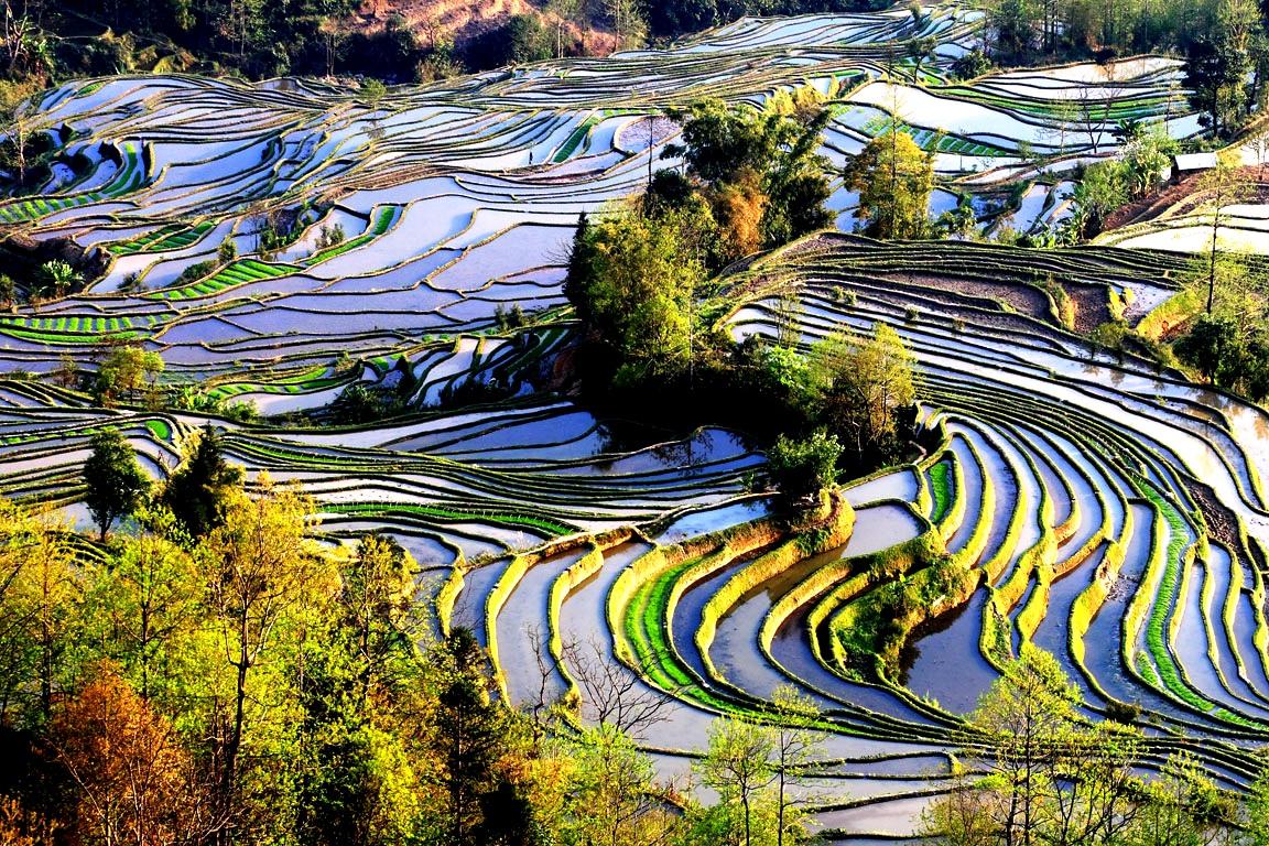 рисовые террасы как наследие ЮНЕСКО