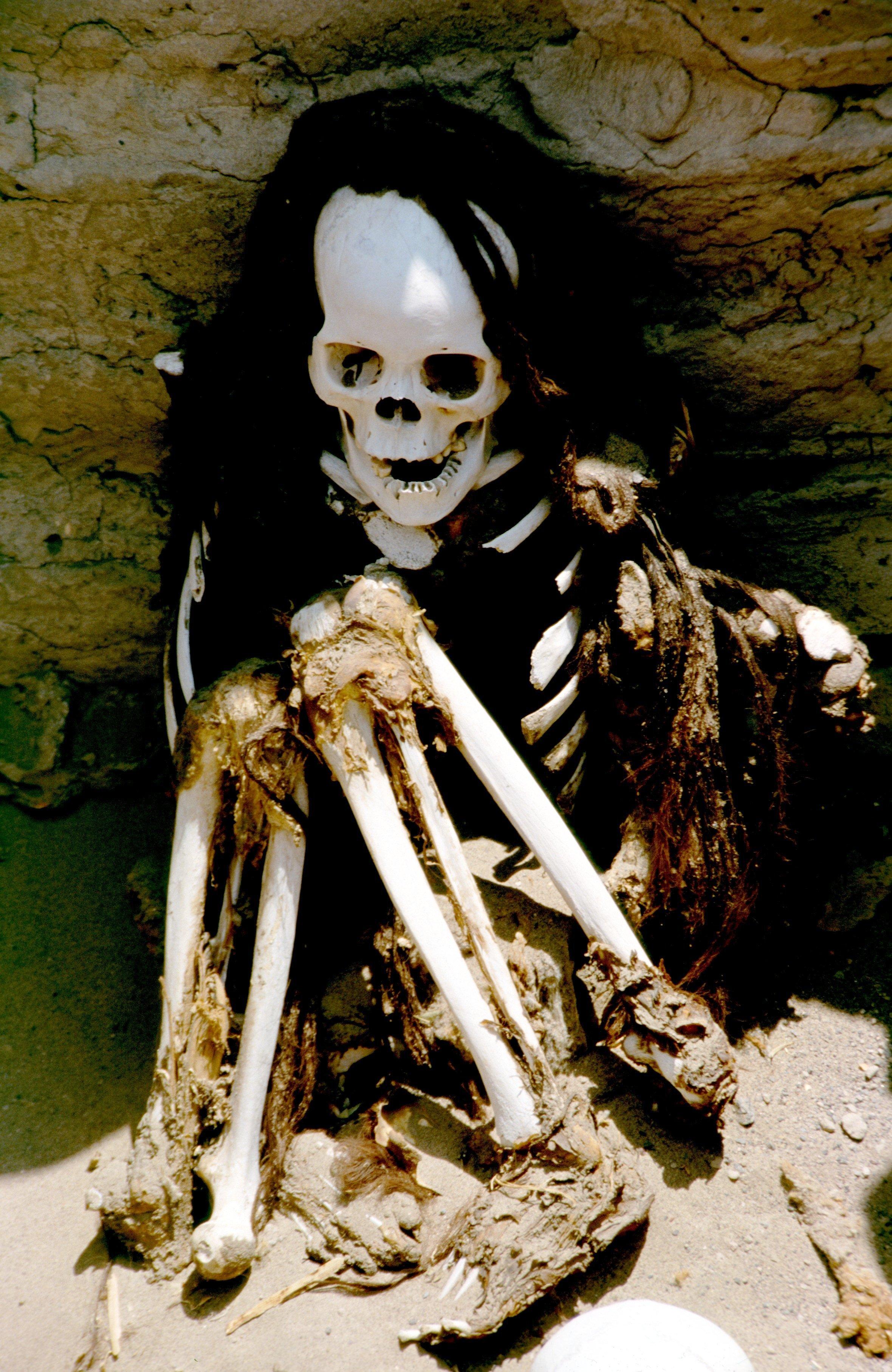скорченный скелет чаучильи
