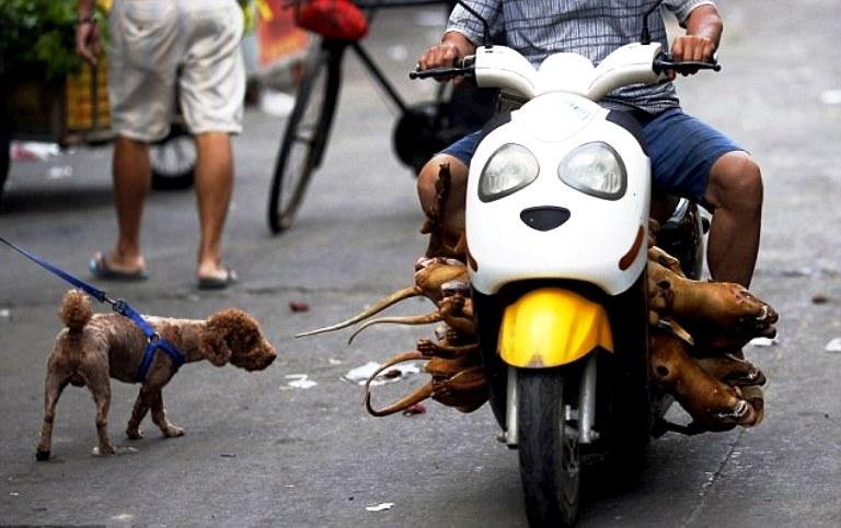 собаки живые и мертвые