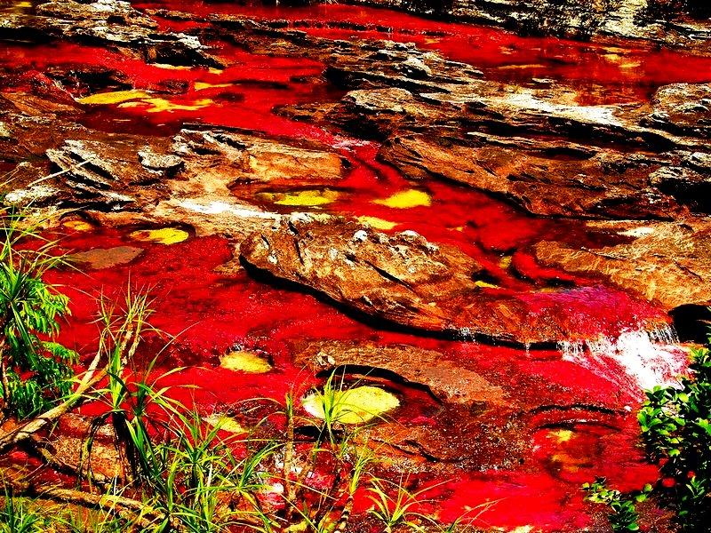 удивительная река в колумбии