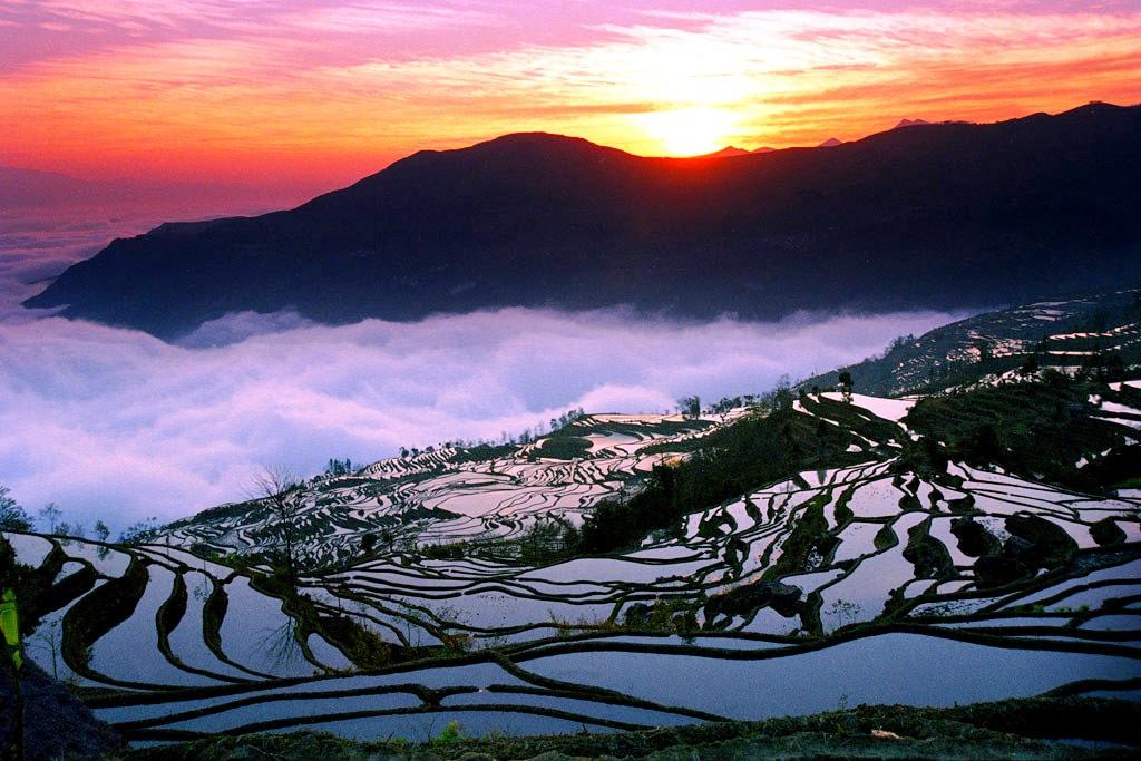 мистический пейзаж рисовых полей