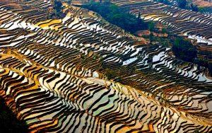 краски рисовых полей