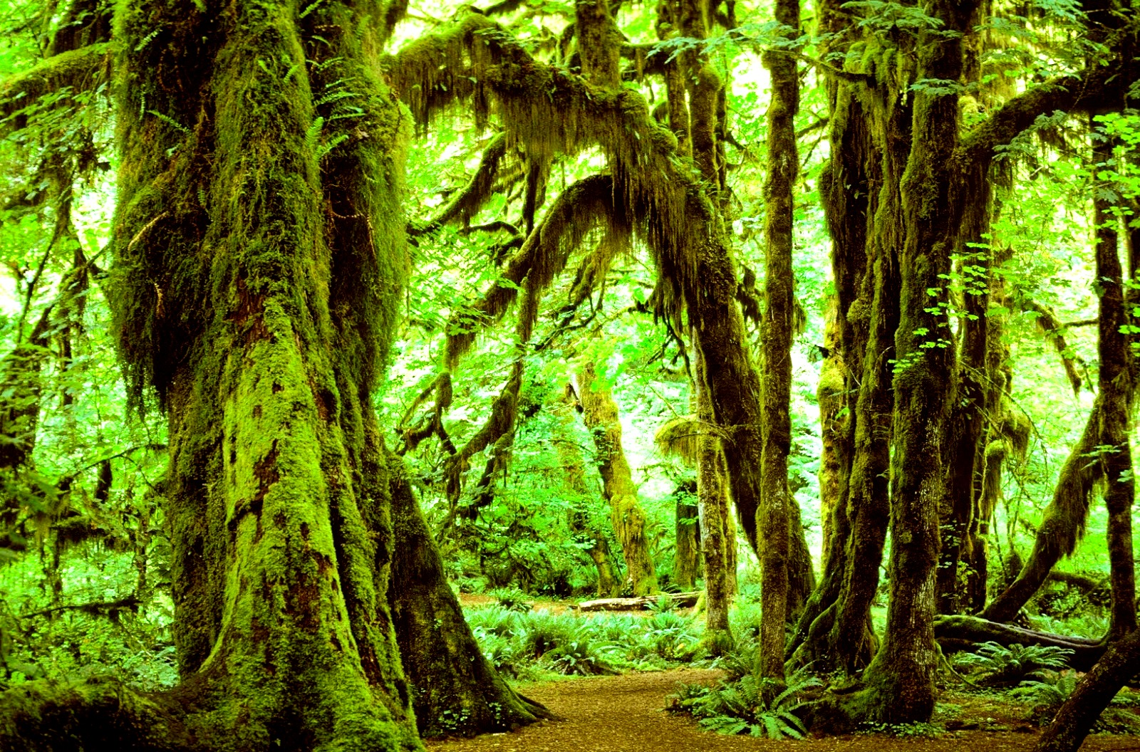 лес олимпика