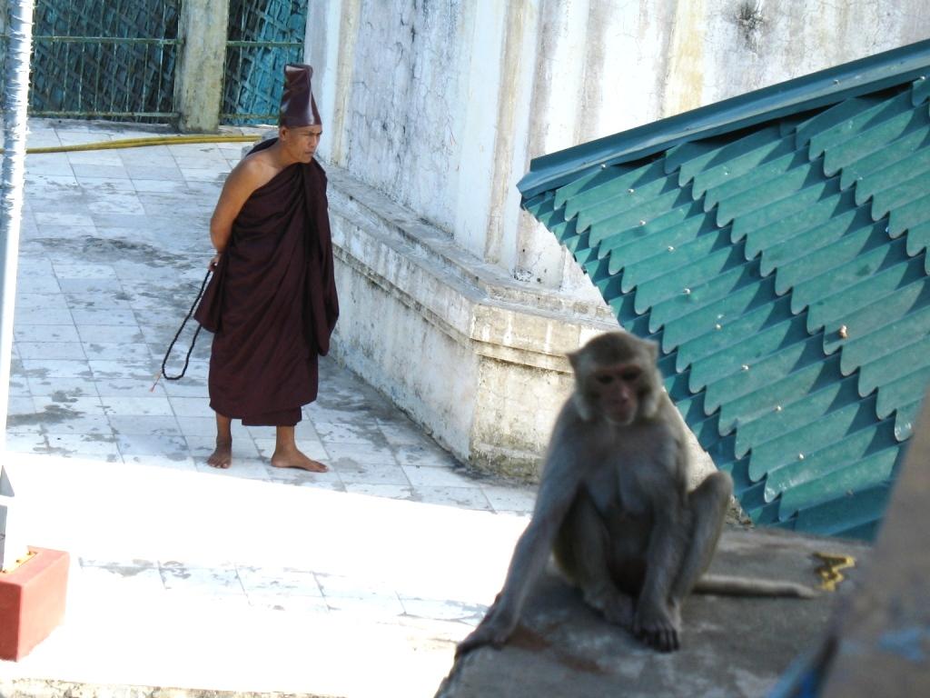 обезьяна с монахом на горе попа