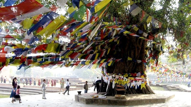 украшенное дерево