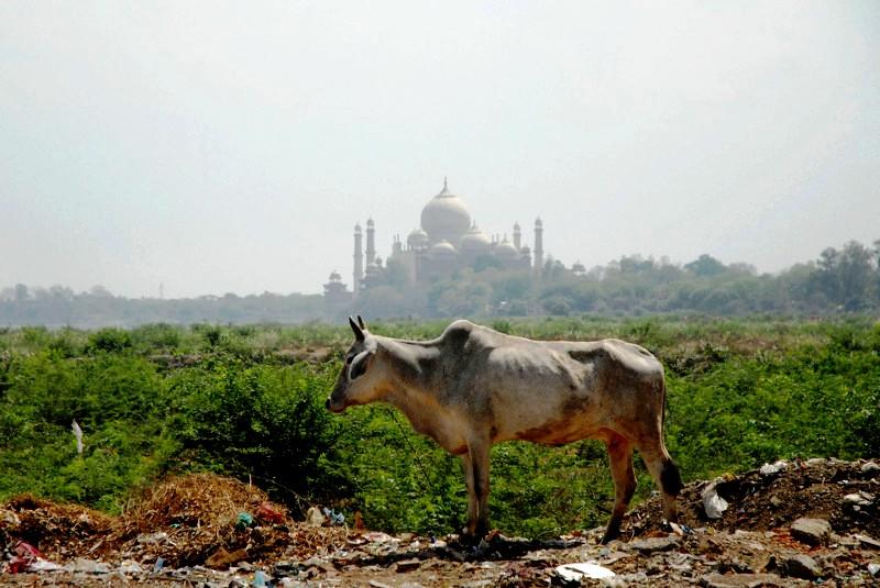 пейзаж индии с тадж-махалом
