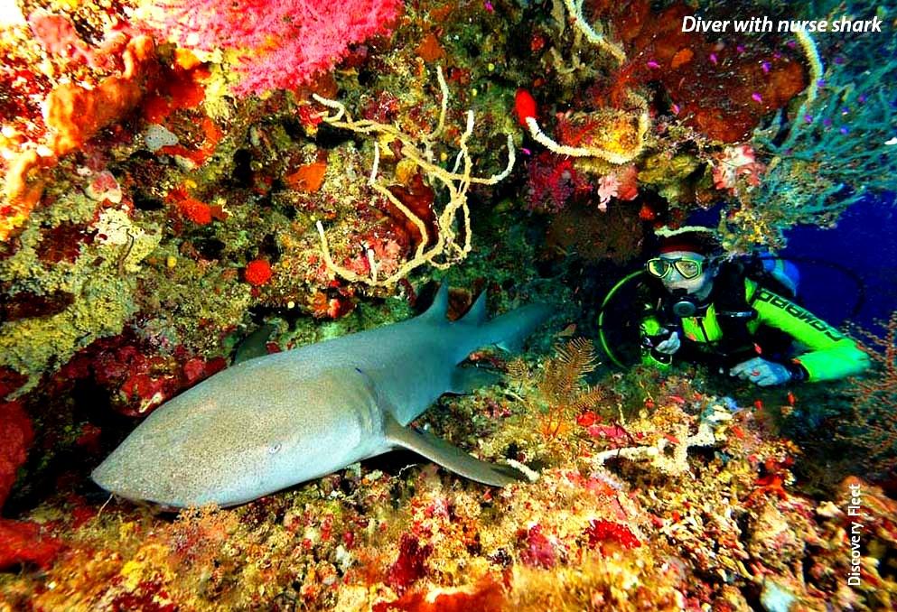 акула нянька