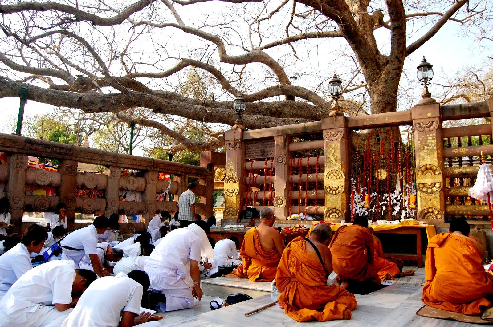 молитвы у дерева бодхи