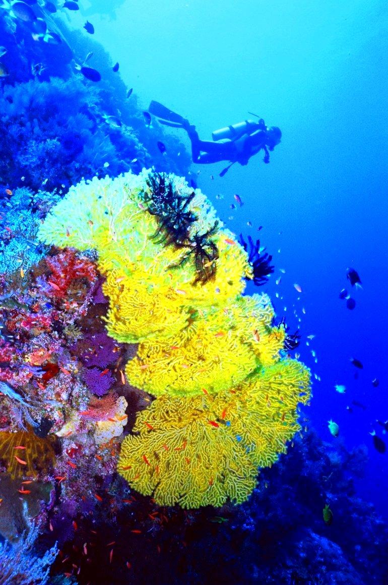 кораллы в парке туббатаха