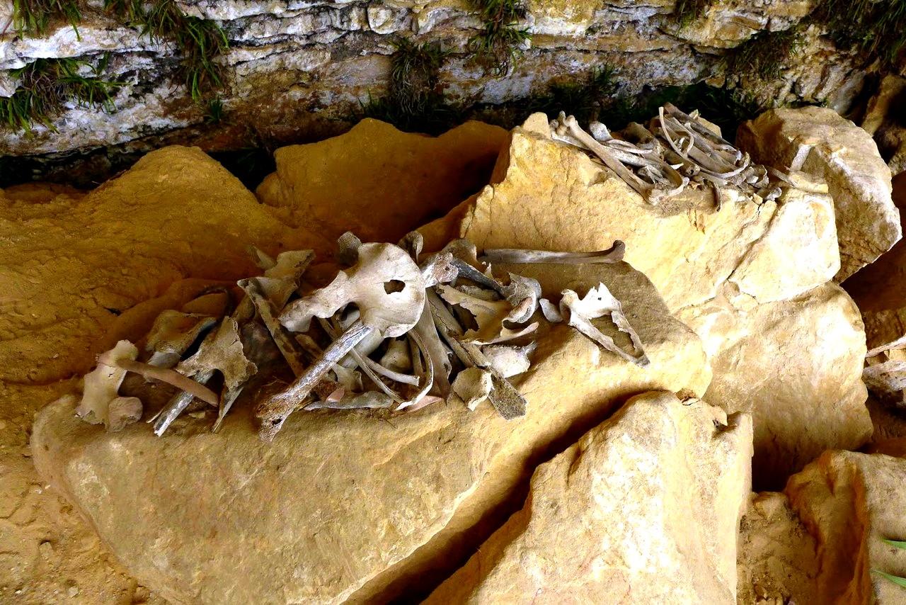 скелеты карахии