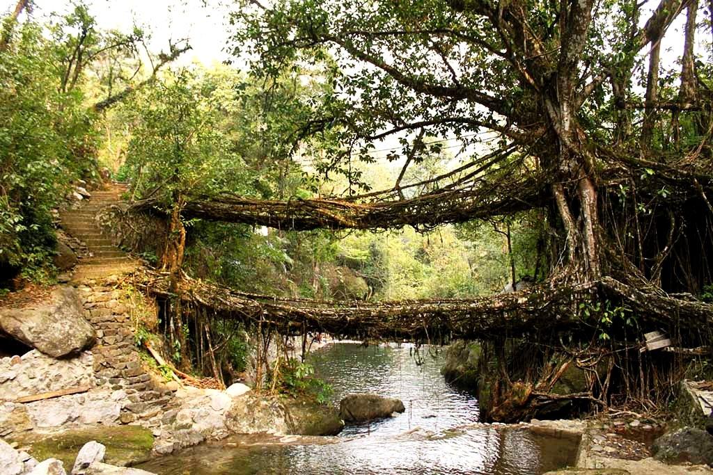 двухэтажный мост из корней