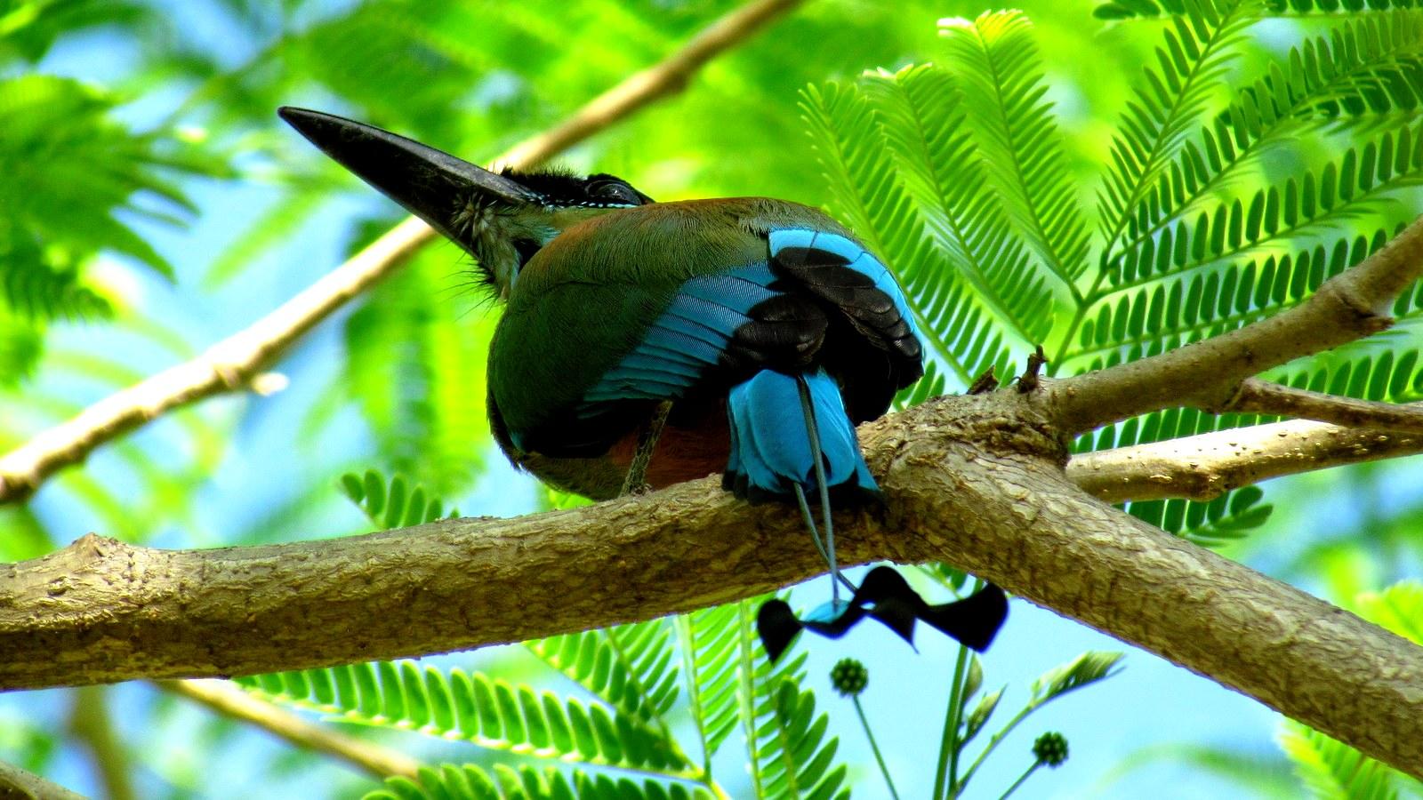 фауна гуанакасте