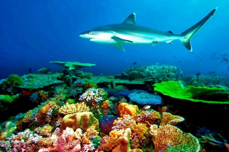 смертоносная красота акулы