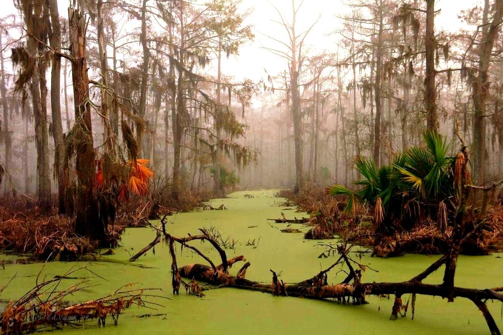 зеленые болота манчак