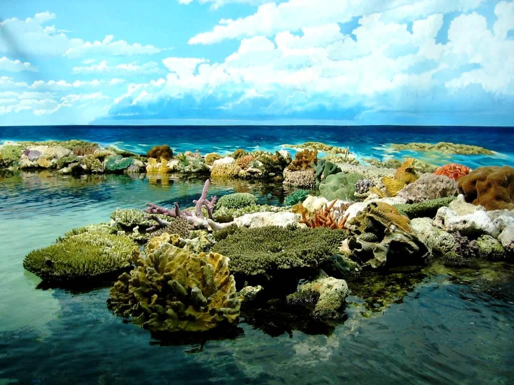 красоты барьерного рифа