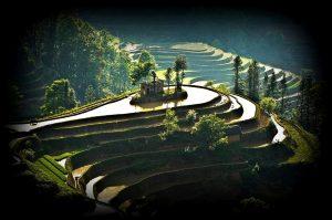 уступы рисовых террас