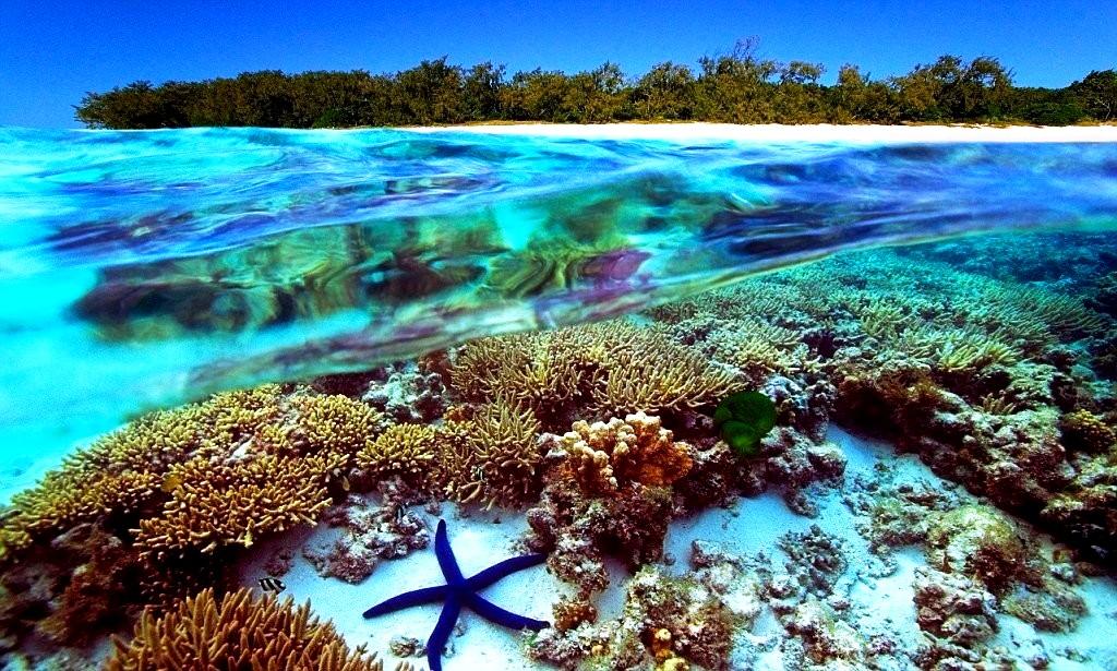 пейзажи рифа