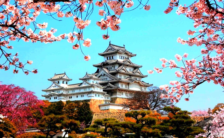 замок в цветах сакуры