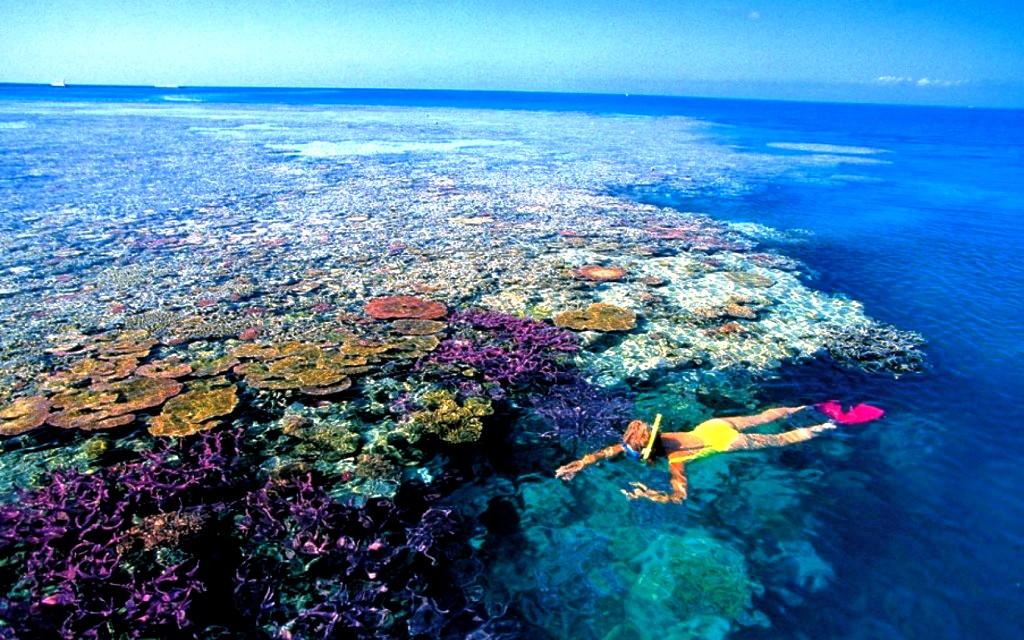 пловец на большом барьерном рифе