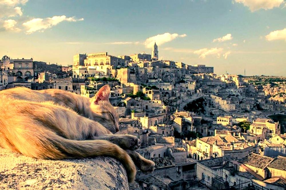 городская кошка матеры
