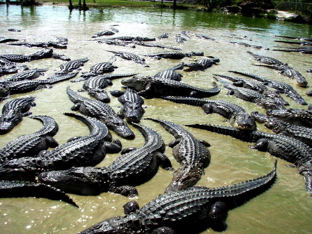 крокодиловые угодья