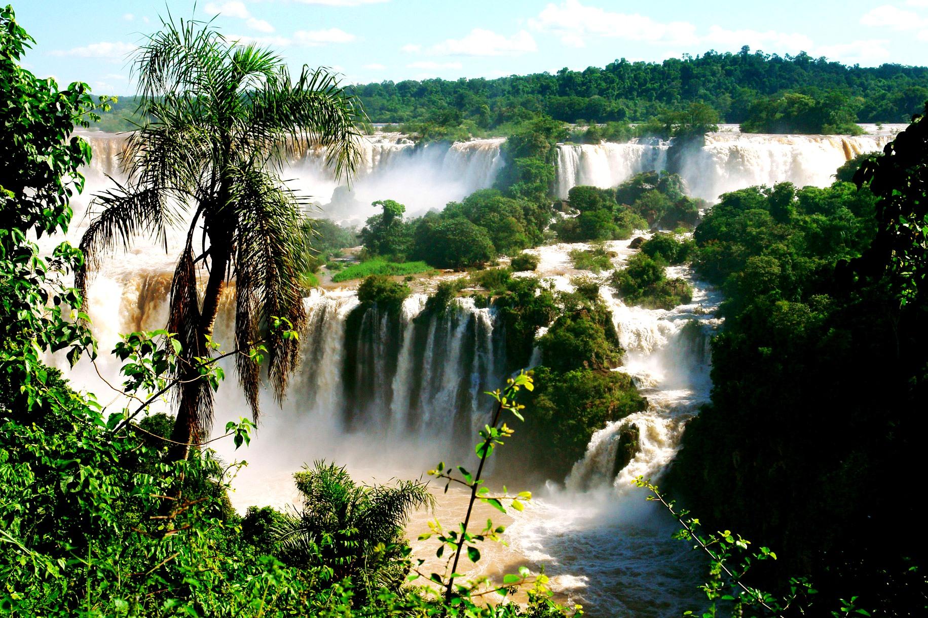 пальма у водопада