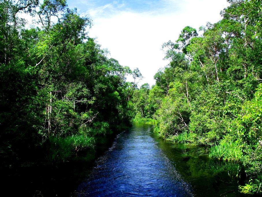 джунгли парка лоренц