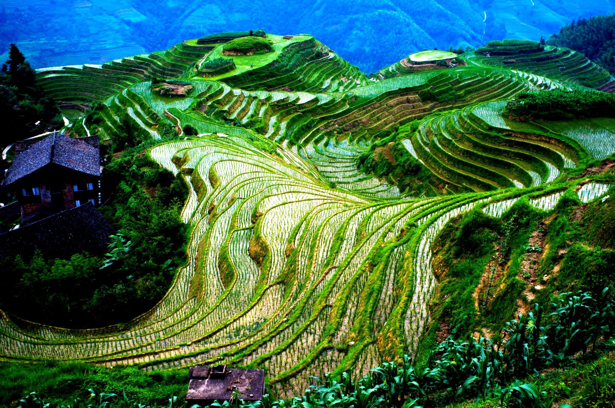 вид на рисовые террасы ифугао