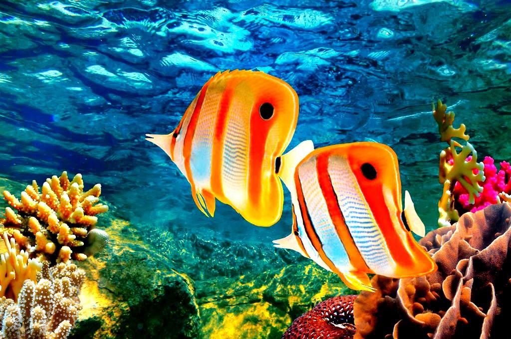 разноцветные рыбешки барьерного рифа