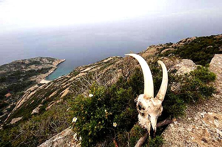 череп козла