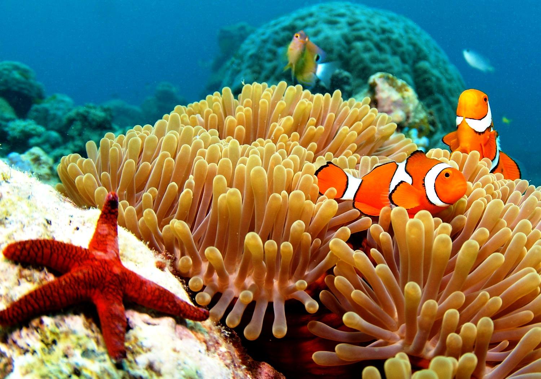 морские обитатели австралии